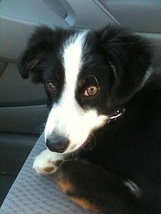car ride puppy
