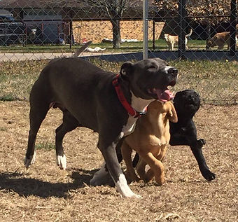 Doggie Playtime!