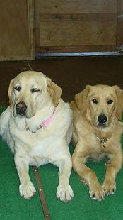 pretty lab friends