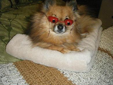 little tanning dog