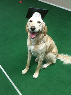Dog Grooming Training Graduate