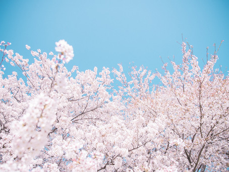 4/4(土)「桜(春の花)」撮影ワークショップ開催します!