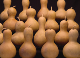 bottle neck gourds.png