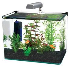Aquarium Penn flex.png