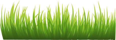 grass_PNG10857.png