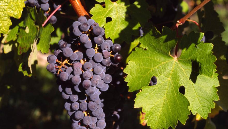 Israel's Wine Region