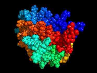 800px-Erythropoietin.png