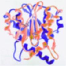 HIV integrase wild mutant N155H ELISA