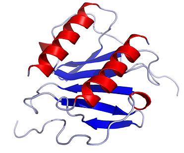 720px-IL8_Solution_Structure.rsh.png