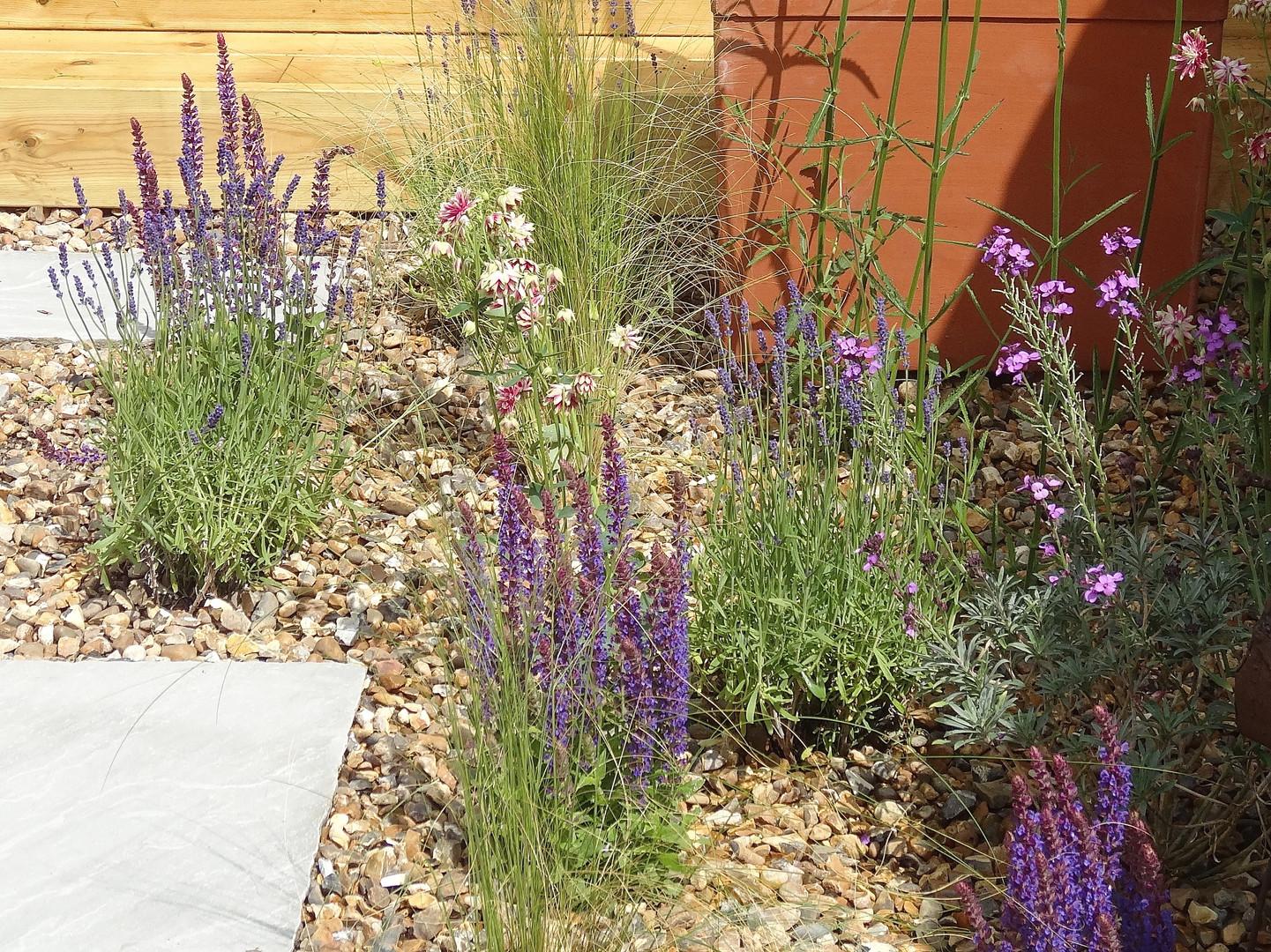 Salvia, lavender and stipa