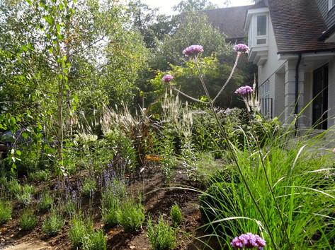 Beechridge Planting Project