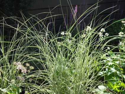 Planting against a dark background