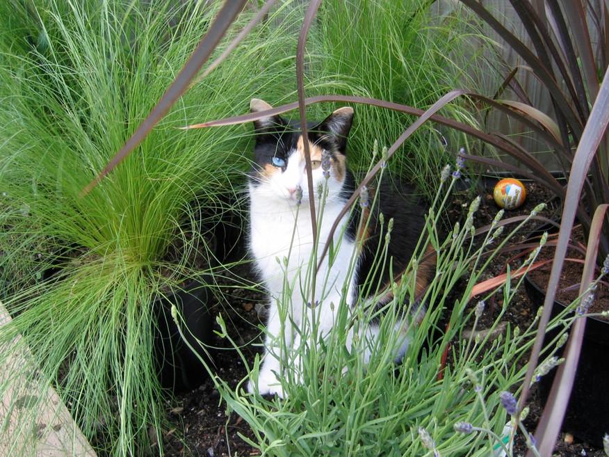 Cats & Grasses....