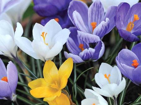 Spring Bulbs - Get Planting!