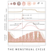 What happens in a menstrual cycle?