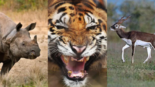 Endangered Species - a cause for concern