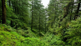 'Megatrends' to affect forests over the coming decade'