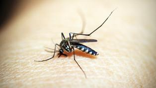 Reduction in Malaria Burden Under Intensified Malaria Elimination Project