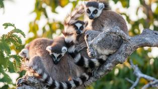 Worldwide legal wildlife trade increased by 200%