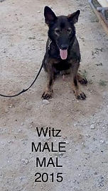 CWD 7 Witz Male Mal 2015 (2).jpg