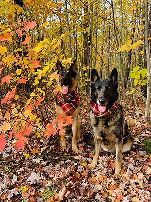 inga and ruger fall pic.jpg