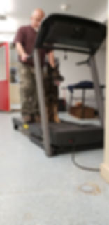 Ciko learning the treadmill.jpg
