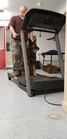 Ciko learning the treadmill.jpg
