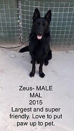 CWD 9 Zeus Male Mal 2015 (2).jpg