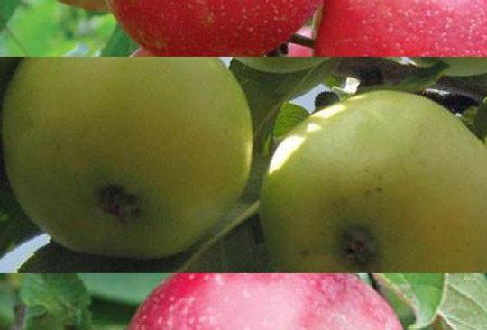 Combination Apple