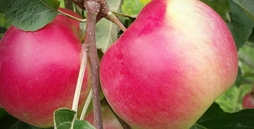 Parkland Apple