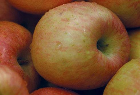 Norland Apple