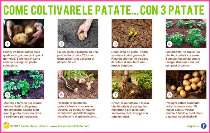 Come coltivare le patate...con 3 patate