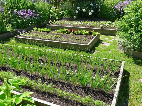 Fatti un orto e sarai felice!