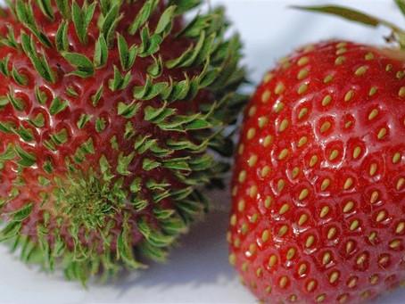 Piccole curiosità sulla frutta che mangi