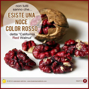 Noce rossa Red Walnut