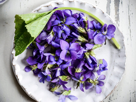 La violetta, il fiore dell'umiltà