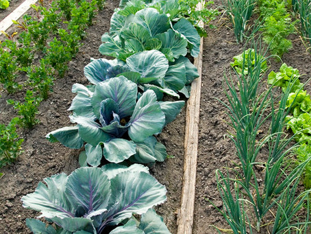I fertilizzanti 100% naturali