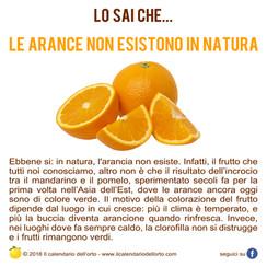 le arance non esistono in natura