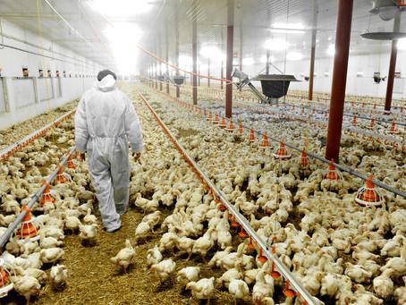 L'impatto ambientale del cibo
