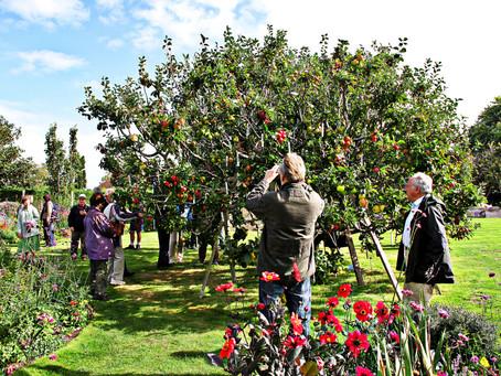 Il magico albero delle mele