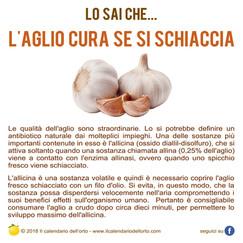 l'aglio cura se si schiaccia