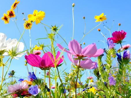 I fiori in cucina: elogio alla bellezza e alla bontà!