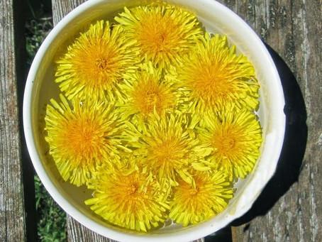 Tarassaco, un fiore magico