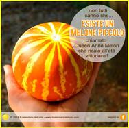 melone in miniatura queen anne