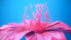 s2_flower1_light_blue_bg_COMP.0002