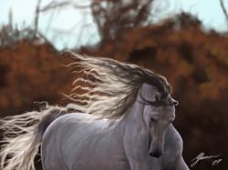 Horse_Final.jpg