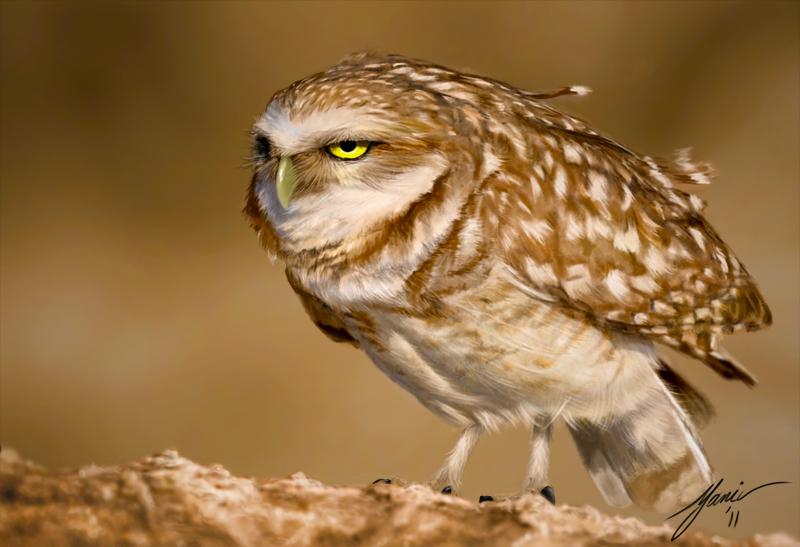 Owl_Final.jpg