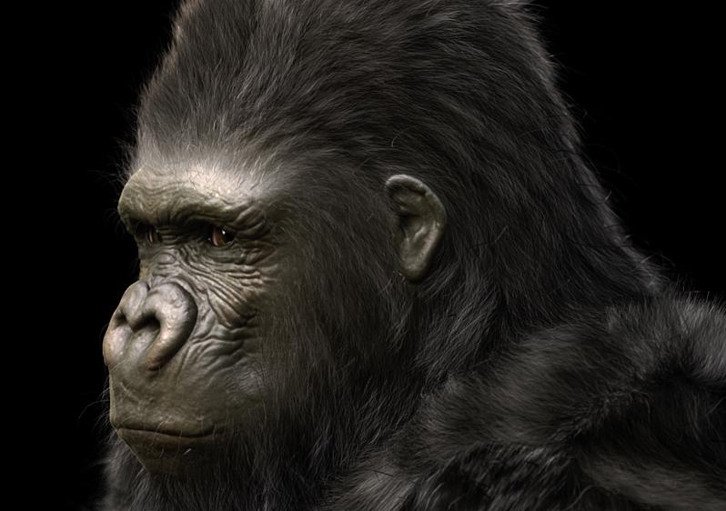 Gorilla_Final.jpg
