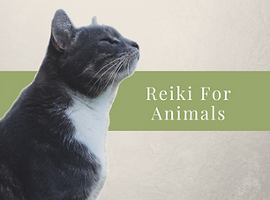 Reiki For Animals.png