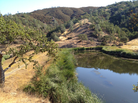 Choosing Coe State Park as Your Corporate Camp Spot